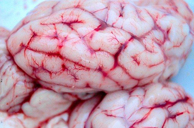 brain-ge19af3131_640